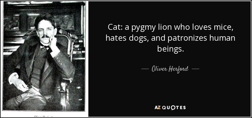 Cat: a pygmy lion who loves mice, hates dogs, and patronizes human beings. - Oliver Herford