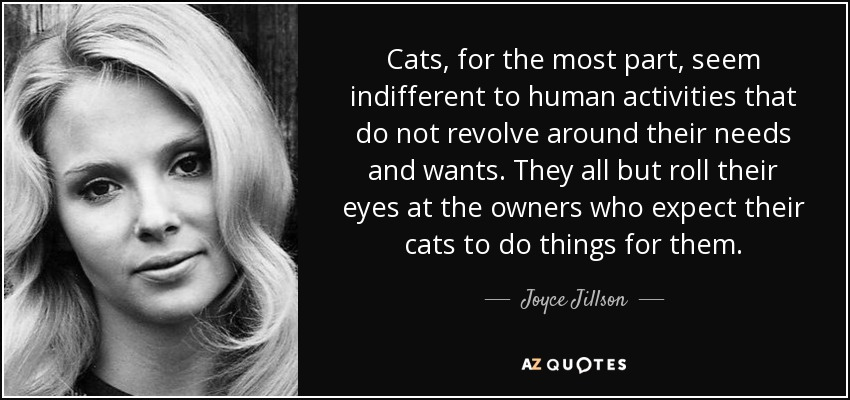 Cats, for the most part, seem indifferent to human activities that do not revolve around their needs and wants. They all but roll their eyes at the owners who expect their cats to do things for them. - Joyce Jillson