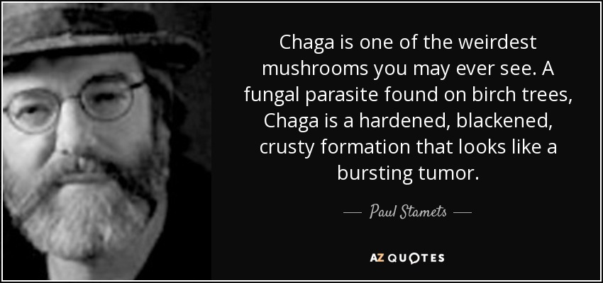 Chaga is one of the weirdest mushrooms you may ever see. A fungal parasite found on birch trees, Chaga is a hardened, blackened, crusty formation that looks like a bursting tumor. - Paul Stamets