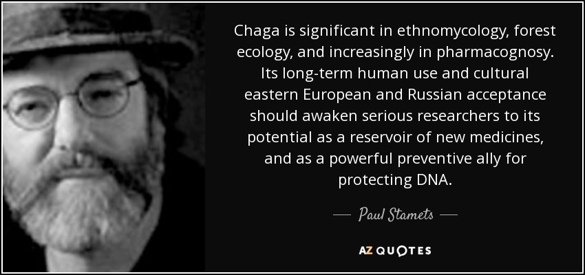 Chaga is significant in ethnomycology, forest ecology, and increasingly in pharmacognosy. Its long-term human use and cultural eastern European and Russian acceptance should awaken serious researchers to its potential as a reservoir of new medicines, and as a powerful preventive ally for protecting DNA. - Paul Stamets