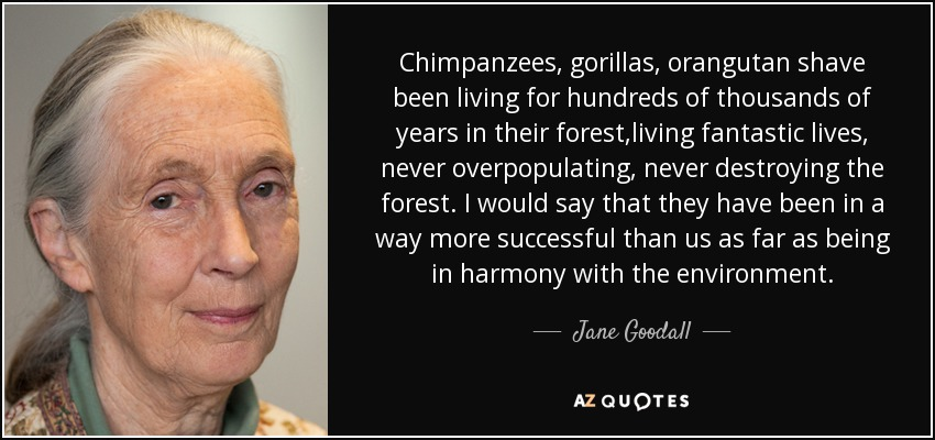 Chimpanzees, gorillas, orangutan shave been living for hundreds of thousands of years in their forest,living fantastic lives, never overpopulating, never destroying the forest. I would say that they have been in a way more successful than us as far as being in harmony with the environment. - Jane Goodall