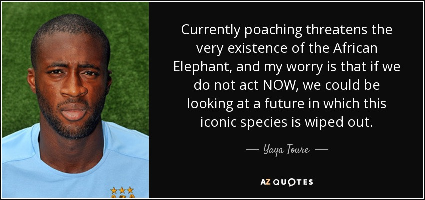 Currently poaching threatens the very existence of the African Elephant, and my worry is that if we do not act NOW, we could be looking at a future in which this iconic species is wiped out. - Yaya Toure