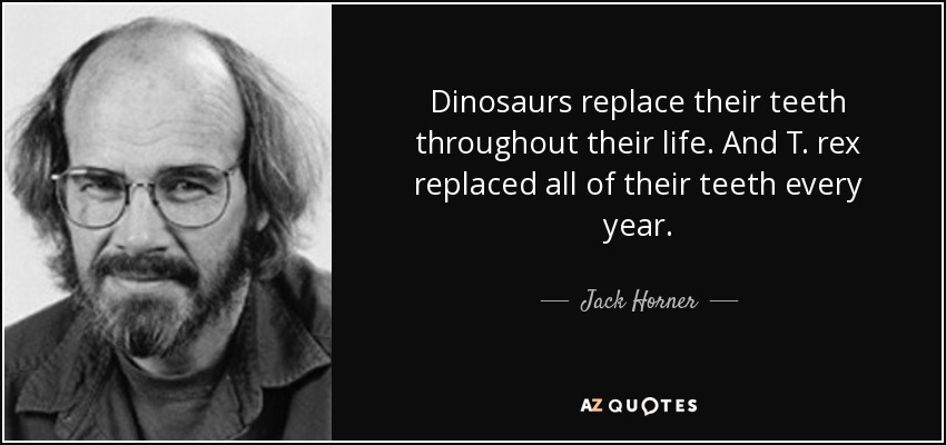 Dinosaurs replace their teeth throughout their life. And T. rex replaced all of their teeth every year. - Jack Horner