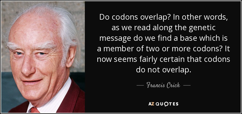 Do codons overlap? In other words, as we read along the genetic message do we find a base which is a member of two or more codons? It now seems fairly certain that codons do not overlap. - Francis Crick