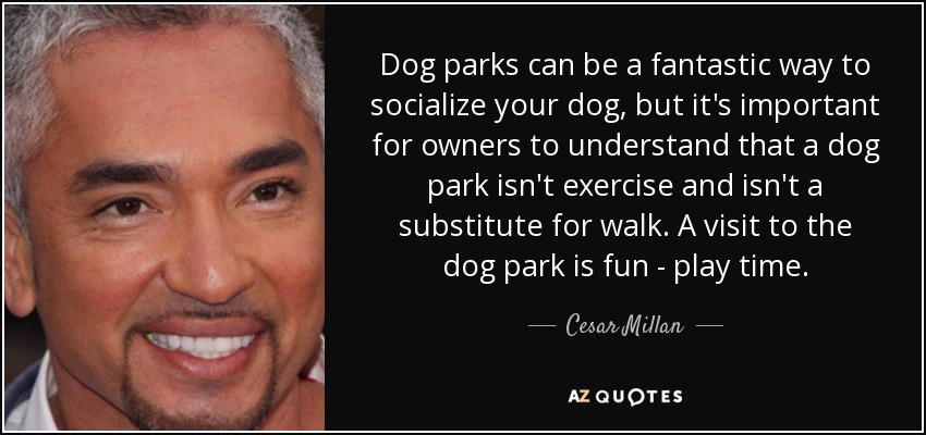 Dog parks can be a fantastic way to socialize your dog, but it's important for owners to understand that a dog park isn't exercise and isn't a substitute for walk. A visit to the dog park is fun - play time. - Cesar Millan