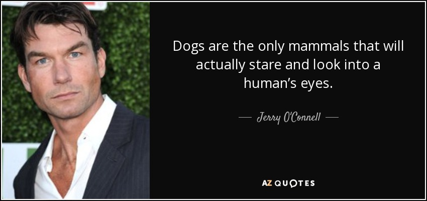 Dogs are the only mammals that will actually stare and look into a human's eyes. - Jerry O'Connell
