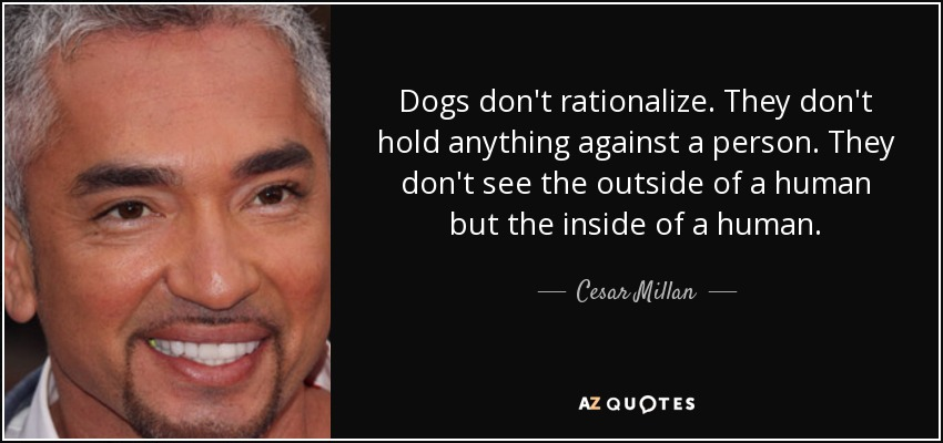 Dogs don't rationalize. They don't hold anything against a person. They don't see the outside of a human but the inside of a human. - Cesar Millan
