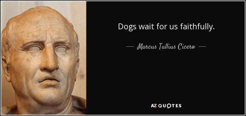 Dogs wait for us faithfully. - Marcus Tullius Cicero