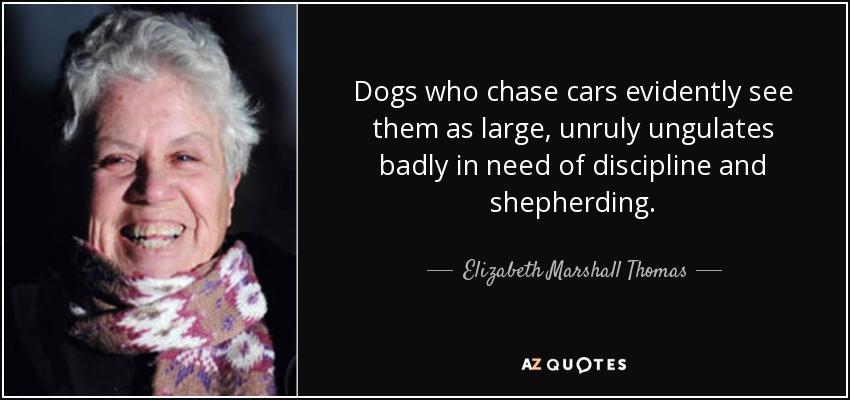 Dogs who chase cars evidently see them as large, unruly ungulates badly in need of discipline and shepherding. - Elizabeth Marshall Thomas