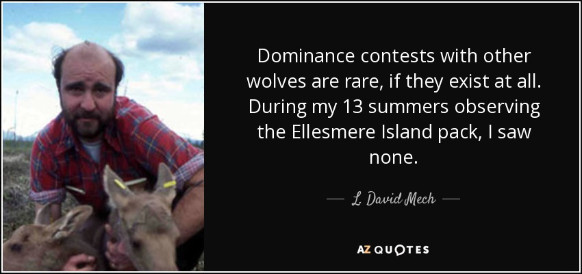 Dominance contests with other wolves are rare, if they exist at all. During my 13 summers observing the Ellesmere Island pack, I saw none. - L. David Mech