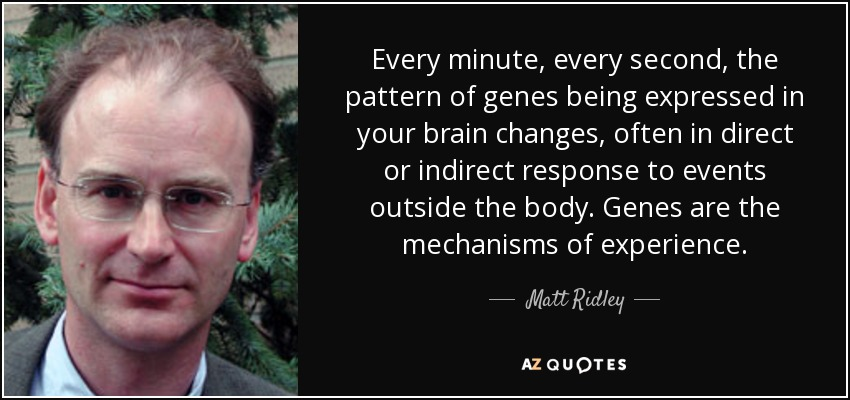 Every minute, every second, the pattern of genes being expressed in your brain changes, often in direct or indirect response to events outside the body. Genes are the mechanisms of experience. - Matt Ridley