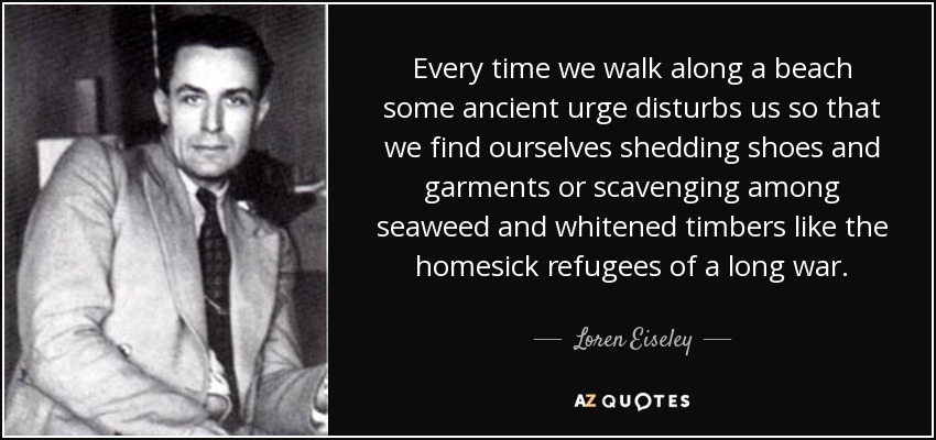 Every time we walk along a beach some ancient urge disturbs us so that we find ourselves shedding shoes and garments or scavenging among seaweed and whitened timbers like the homesick refugees of a long war. - Loren Eiseley