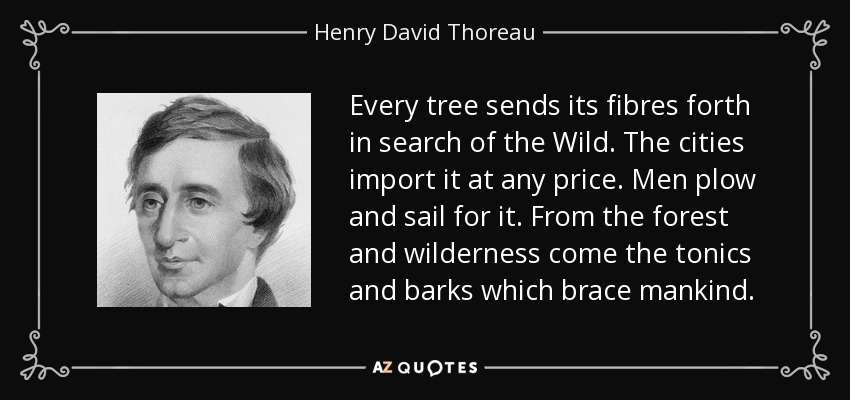 Every tree sends its fibres forth in search of the Wild. The cities import it at any price. Men plow and sail for it. From the forest and wilderness come the tonics and barks which brace mankind. - Henry David Thoreau