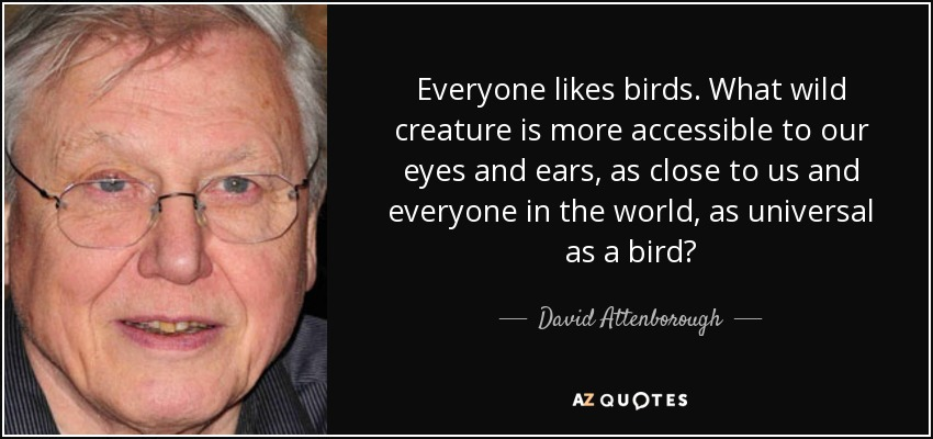 Everyone likes birds. What wild creature is more accessible to our eyes and ears, as close to us and everyone in the world, as universal as a bird? - David Attenborough