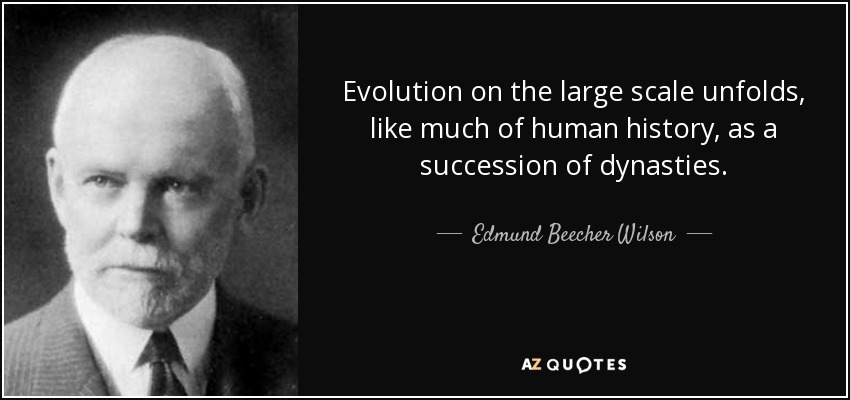 Evolution on the large scale unfolds, like much of human history, as a succession of dynasties. - Edmund Beecher Wilson