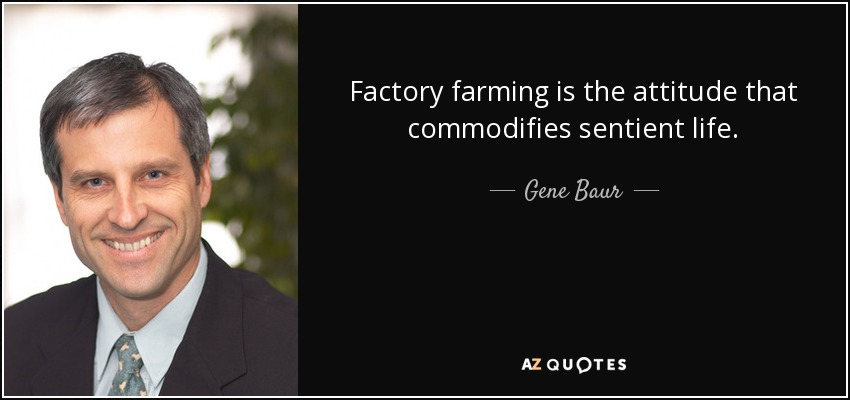 Factory farming is the attitude that commodifies sentient life. - Gene Baur