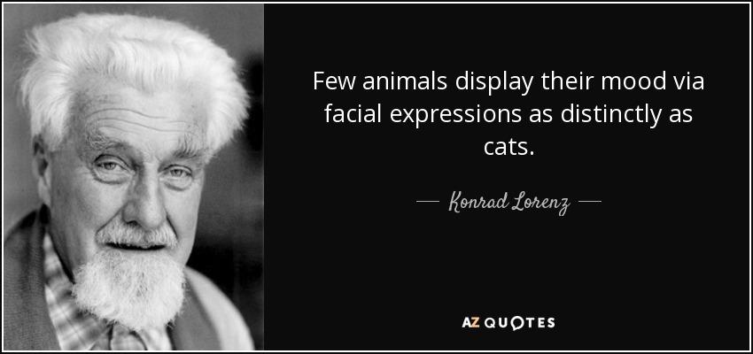 Few animals display their mood via facial expressions as distinctly as cats. - Konrad Lorenz