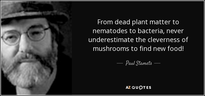 From dead plant matter to nematodes to bacteria, never underestimate the cleverness of mushrooms to find new food! - Paul Stamets