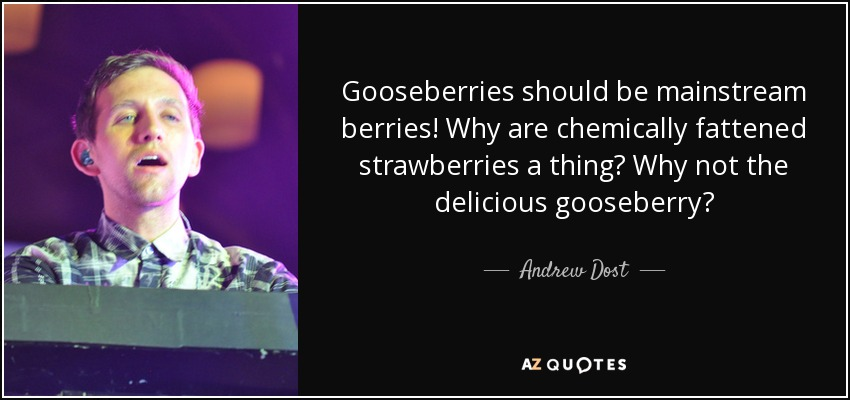 Gooseberries should be mainstream berries! Why are chemically fattened strawberries a thing? Why not the delicious gooseberry? - Andrew Dost