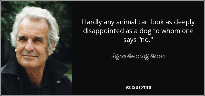 Hardly any animal can look as deeply disappointed as a dog to whom one says