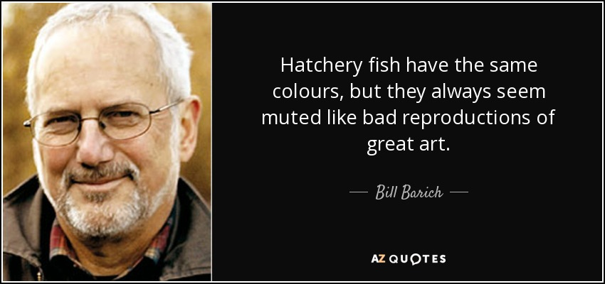 Hatchery fish have the same colours, but they always seem muted like bad reproductions of great art. - Bill Barich