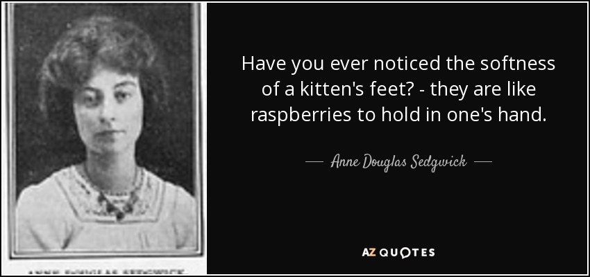 Have you ever noticed the softness of a kitten's feet? - they are like raspberries to hold in one's hand. - Anne Douglas Sedgwick