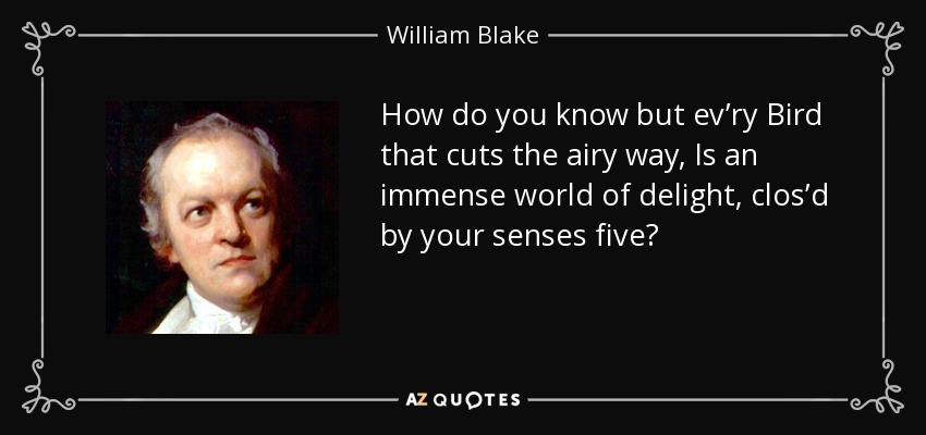 How do you know but ev'ry Bird that cuts the airy way, Is an immense world of delight, clos'd by your senses five? - William Blake