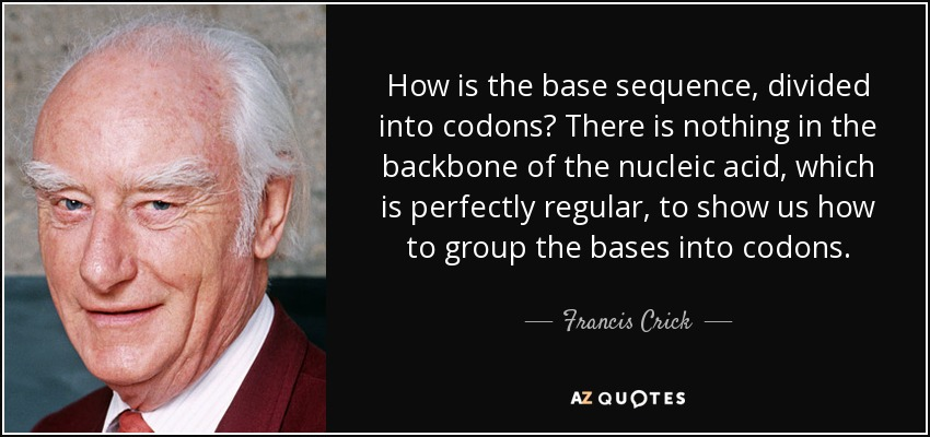 How is the base sequence, divided into codons? There is nothing in the backbone of the nucleic acid, which is perfectly regular, to show us how to group the bases into codons. - Francis Crick