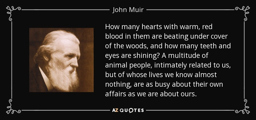 How many hearts with warm, red blood in them are beating under cover of the woods, and how many teeth and eyes are shining? A multitude of animal people, intimately related to us, but of whose lives we know almost nothing, are as busy about their own affairs as we are about ours. - John Muir
