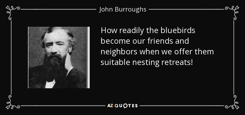 How readily the bluebirds become our friends and neighbors when we offer them suitable nesting retreats! - John Burroughs