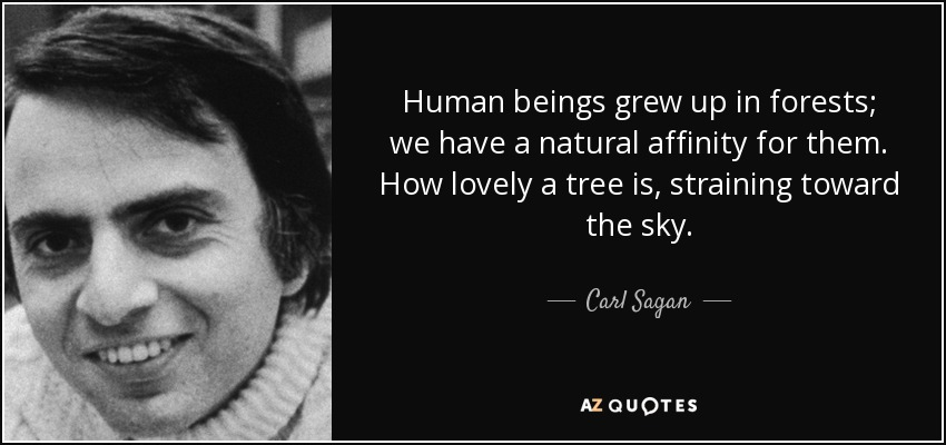 Human beings grew up in forests; we have a natural affinity for them. How lovely a tree is, straining toward the sky. - Carl Sagan