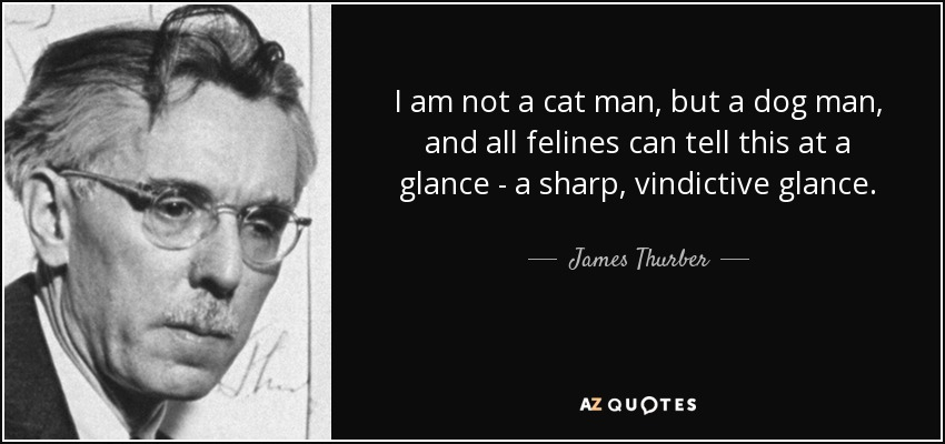I am not a cat man, but a dog man, and all felines can tell this at a glance - a sharp, vindictive glance. - James Thurber