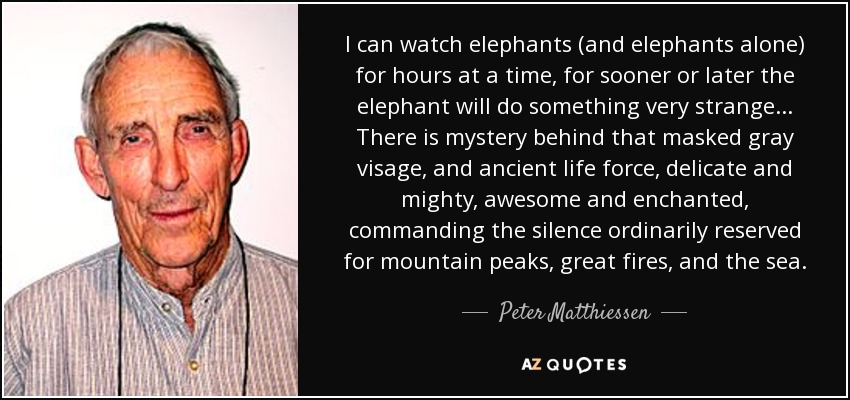 I can watch elephants (and elephants alone) for hours at a time, for sooner or later the elephant will do something very strange... There is mystery behind that masked gray visage, and ancient life force, delicate and mighty, awesome and enchanted, commanding the silence ordinarily reserved for mountain peaks, great fires, and the sea. - Peter Matthiessen