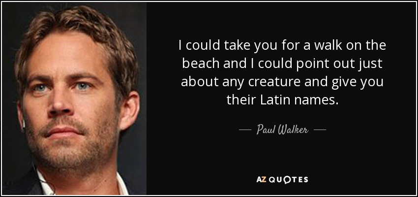 I could take you for a walk on the beach and I could point out just about any creature and give you their Latin names. - Paul Walker