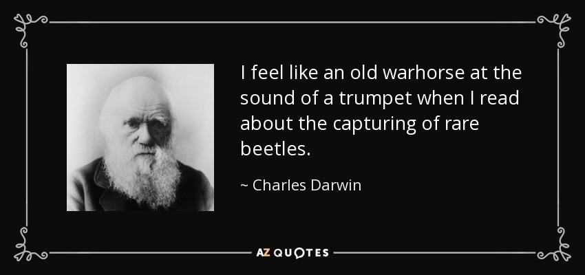 I feel like an old warhorse at the sound of a trumpet when I read about the capturing of rare beetles. - Charles Darwin
