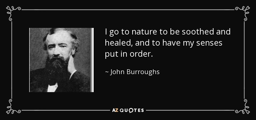 I go to nature to be soothed and healed, and to have my senses put in order. - John Burroughs