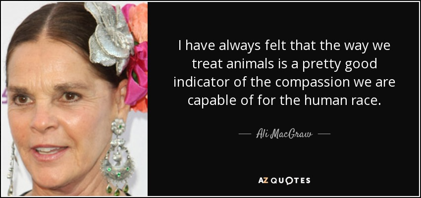 I have always felt that the way we treat animals is a pretty good indicator of the compassion we are capable of for the human race. - Ali MacGraw