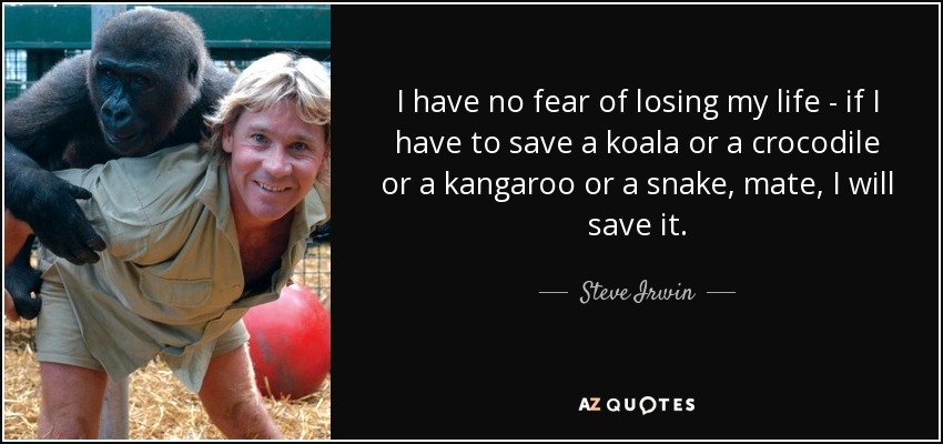 I have no fear of losing my life - if I have to save a koala or a crocodile or a kangaroo or a snake, mate, I will save it. - Steve Irwin