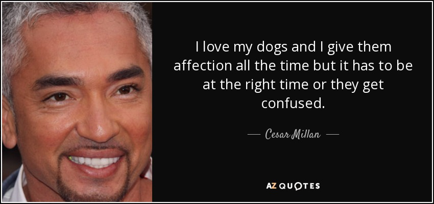 I love my dogs and I give them affection all the time but it has to be at the right time or they get confused. - Cesar Millan