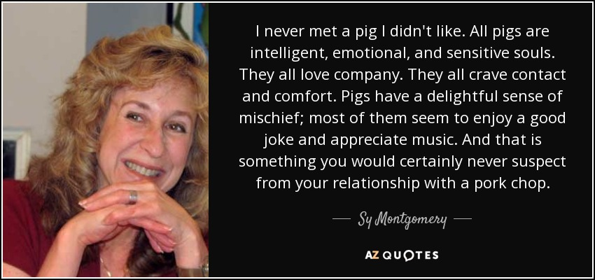 I never met a pig I didn't like. All pigs are intelligent, emotional, and sensitive souls. They all love company. They all crave contact and comfort. Pigs have a delightful sense of mischief; most of them seem to enjoy a good joke and appreciate music. And that is something you would certainly never suspect from your relationship with a pork chop. - Sy Montgomery