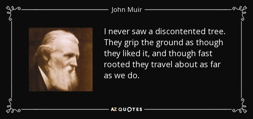 I never saw a discontented tree. They grip the ground as though they liked it, and though fast rooted they travel about as far as we do. - John Muir