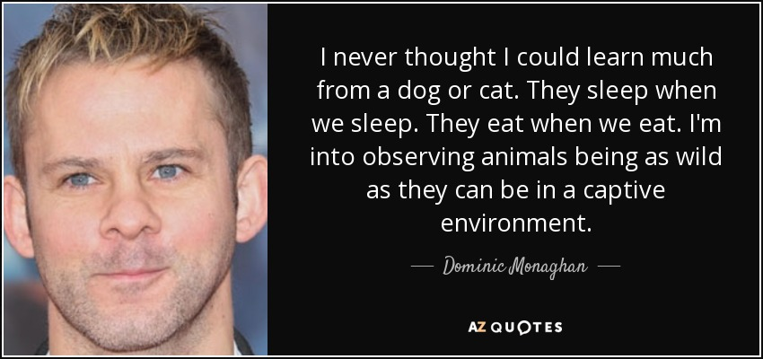 I never thought I could learn much from a dog or cat. They sleep when we sleep. They eat when we eat. I'm into observing animals being as wild as they can be in a captive environment. - Dominic Monaghan