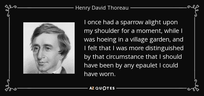 I once had a sparrow alight upon my shoulder for a moment, while I was hoeing in a village garden, and I felt that I was more distinguished by that circumstance that I should have been by any epaulet I could have worn. - Henry David Thoreau