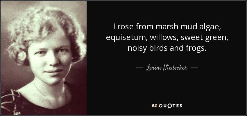 I rose from marsh mud algae, equisetum, willows, sweet green, noisy birds and frogs. - Lorine Niedecker