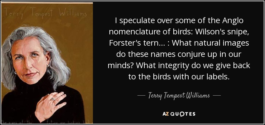 I speculate over some of the Anglo nomenclature of birds: Wilson's snipe, Forster's tern . . . : What natural images do these names conjure up in our minds? What integrity do we give back to the birds with our labels. - Terry Tempest Williams
