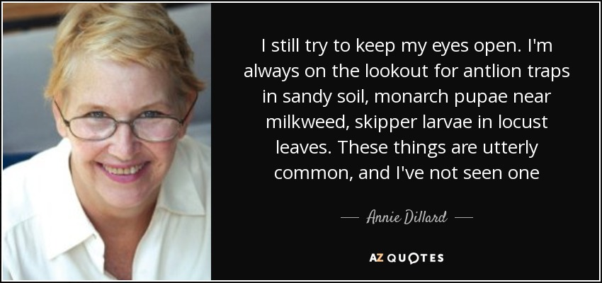 I still try to keep my eyes open. I'm always on the lookout for antlion traps in sandy soil, monarch pupae near milkweed, skipper larvae in locust leaves. These things are utterly common, and I've not seen one - Annie Dillard