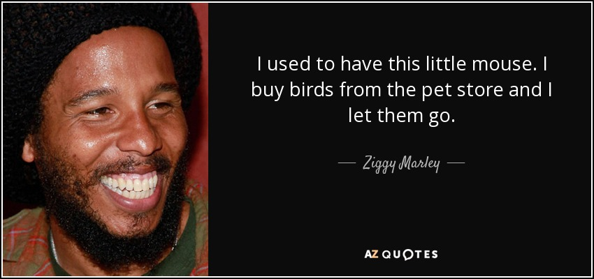 I used to have this little mouse. I buy birds from the pet store and I let them go. - Ziggy Marley