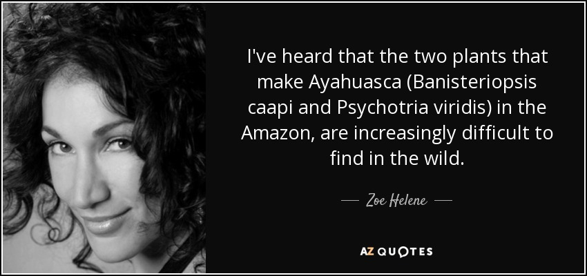 I've heard that the two plants that make Ayahuasca (Banisteriopsis caapi and Psychotria viridis) in the Amazon, are increasingly difficult to find in the wild. - Zoe Helene