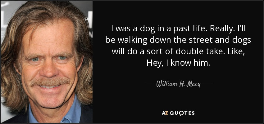 I was a dog in a past life. Really. I'll be walking down the street and dogs will do a sort of double take. Like, Hey, I know him. - William H. Macy