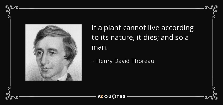If a plant cannot live according to its nature, it dies; and so a man. - Henry David Thoreau